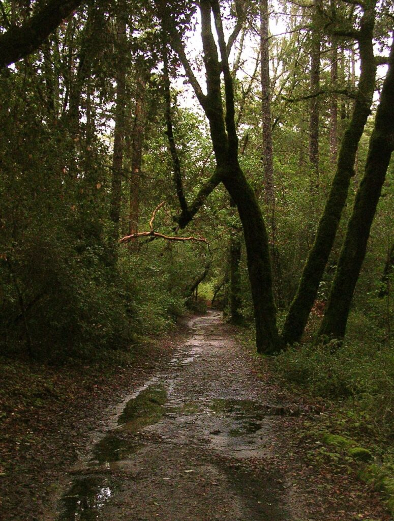 Henry Cowell Park, Graham Hill entrance.