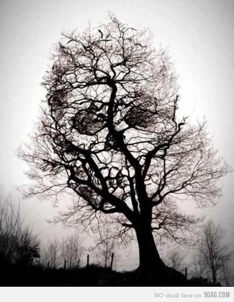 skulltree