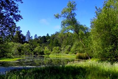 Quail Hallow Ranch, Pond, Felton